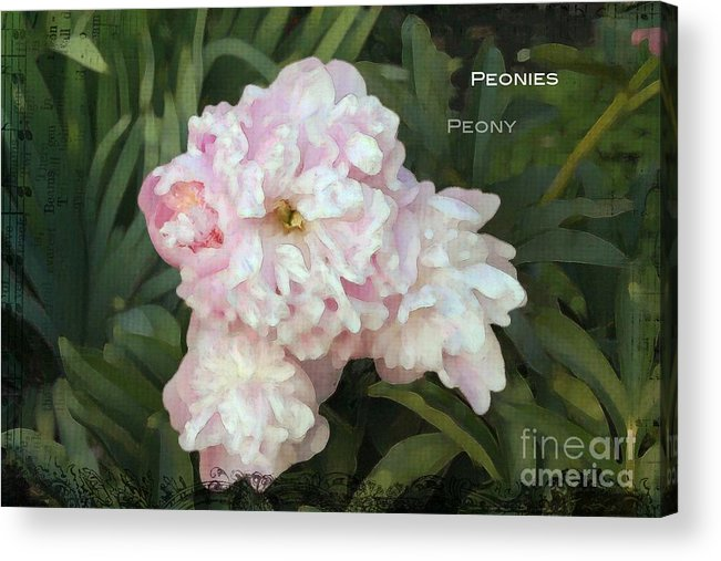 Peony Acrylic Print featuring the photograph I Cry For You My Peonies by Rosemary Aubut
