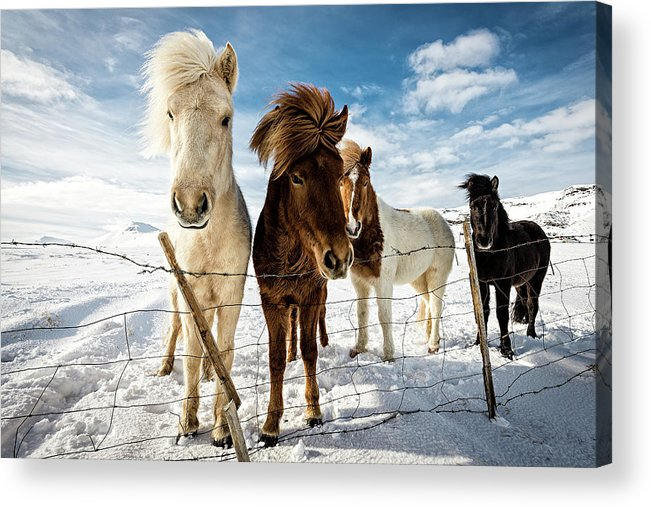 Landscape Acrylic Print featuring the photograph Icelandic Hair Style by Mike Leske