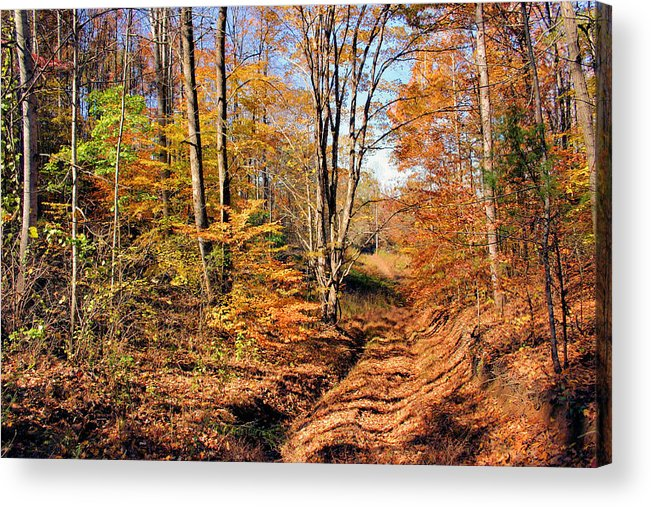 In The Woods Acrylic Print featuring the photograph In The Woods by Kristin Elmquist