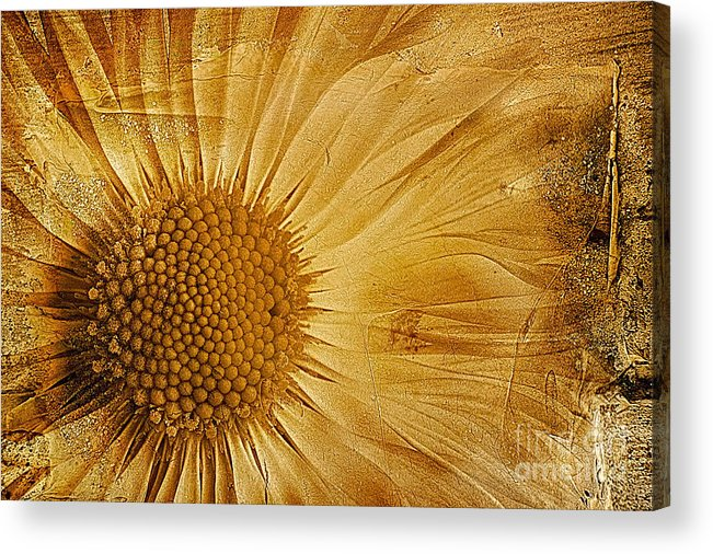 Textured Bellis Perennis Acrylic Print featuring the photograph Infusion by John Edwards