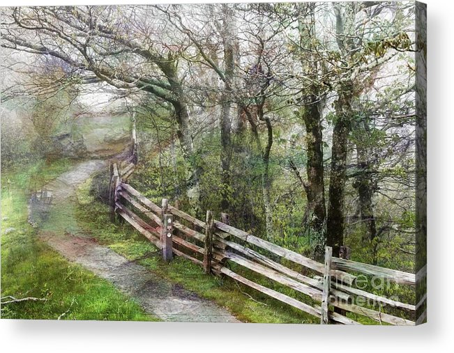 Nature Acrylic Print featuring the photograph Into The Woods by Anne Pendred