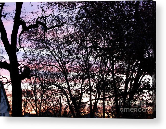 Trees Acrylic Print featuring the photograph Jammer Cotton Candy Trees by First Star Art