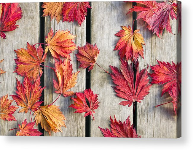 Japanese Acrylic Print featuring the photograph Japanese Maple Tree Leaves On Wood Deck by David Gn