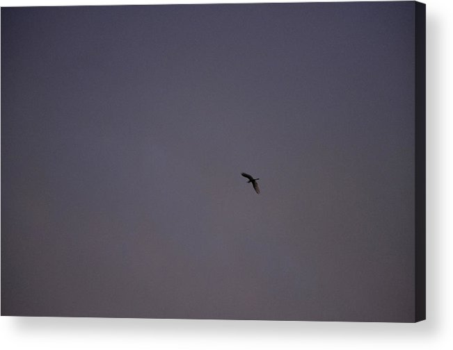 Color Acrylic Print featuring the photograph Lavender Sky With Flying Bird by Sally Rockefeller