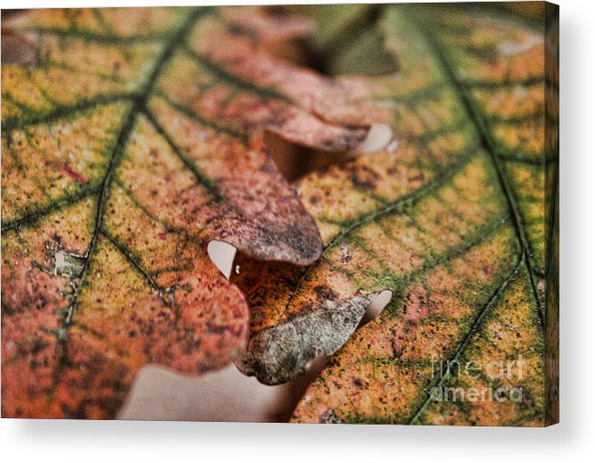 Trees Acrylic Print featuring the photograph Leaves by Kristy Ollis