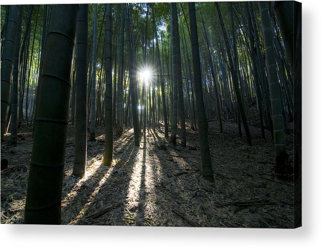 Bamboo Acrylic Print featuring the photograph Light At The End by Aaron Bedell