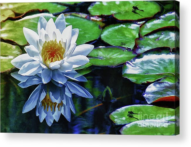 Pond Acrylic Print featuring the painting Lily And Dragon Flies by Elaine Manley