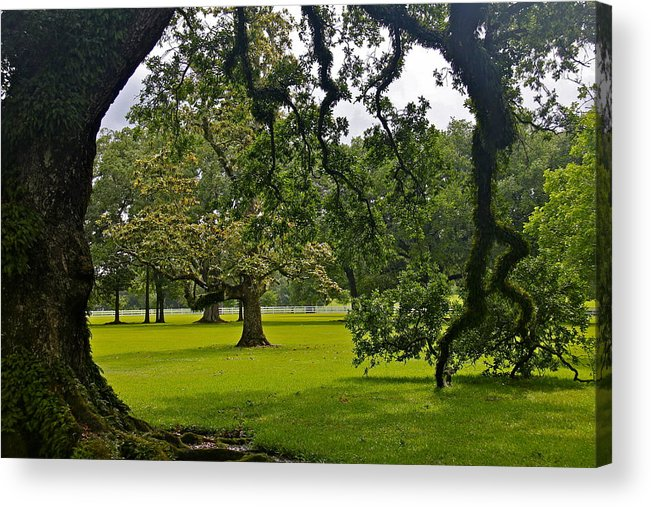 Tree Acrylic Print featuring the photograph Live Oak Tree At Oak Alley Plantation by Denise Mazzocco