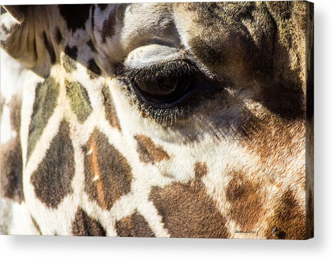 Zoo Acrylic Print featuring the photograph Look Into My Eye by Dick Botkin