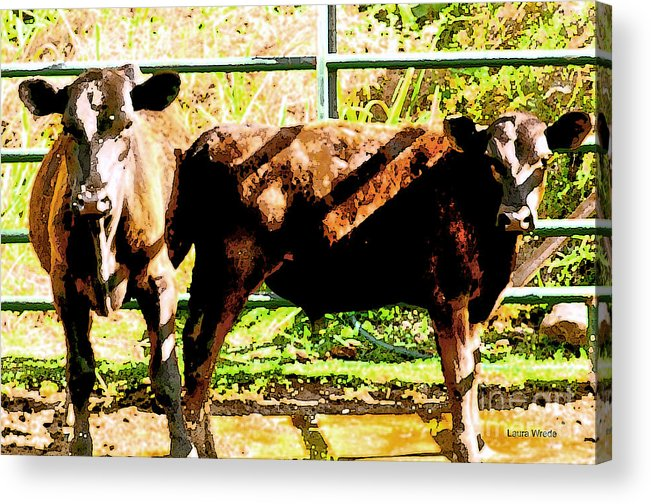 Cow Art Photographs Acrylic Print featuring the photograph Looking At You by Artist and Photographer Laura Wrede