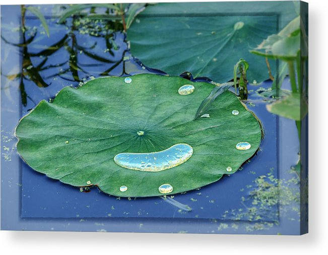 Concord Acrylic Print featuring the photograph Lotus Picture Of Happiness by Sylvia J Zarco