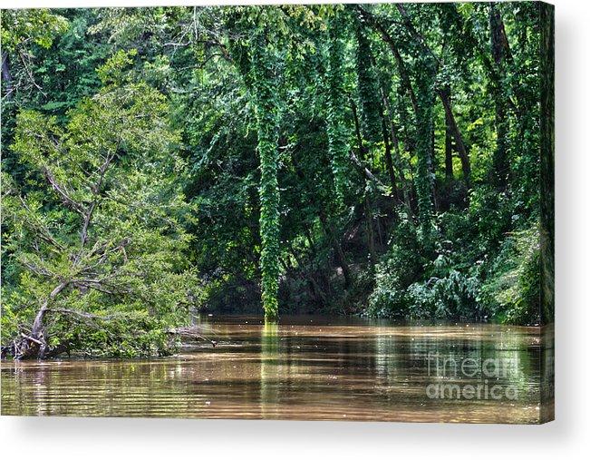 Cypress Acrylic Print featuring the photograph Louisiana Bayou Toro Creek Swamp by D Wallace
