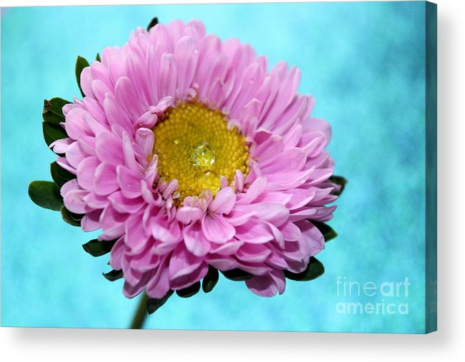 Pink Flower Acrylic Print featuring the photograph Love Is True by Krissy Katsimbras