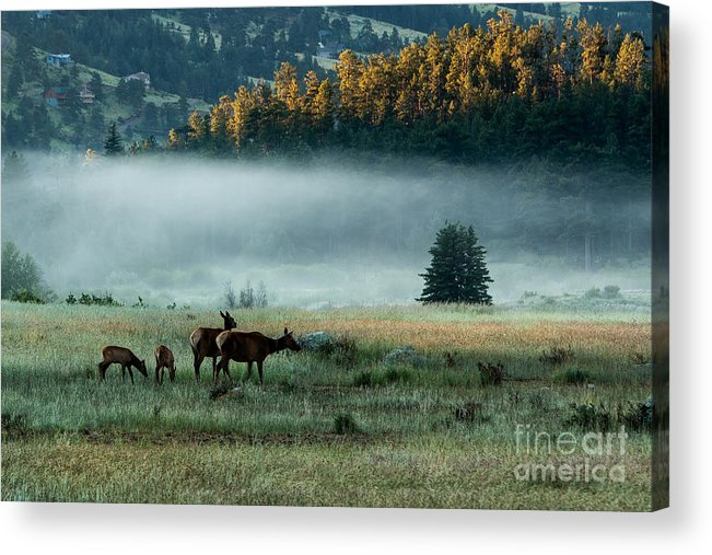 2014 Acrylic Print featuring the photograph Misty Breakfast by Ray K