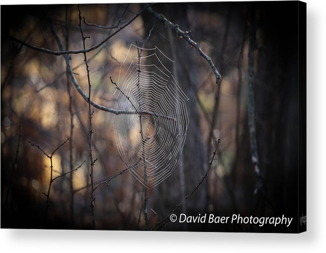 Spider Web Acrylic Print featuring the photograph Morning Dew by David Baer
