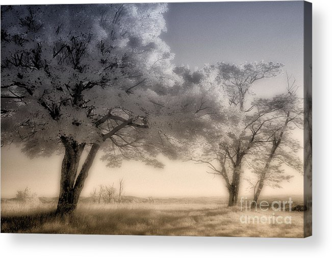 North Carolina Acrylic Print featuring the photograph Morning Softness II - Blue Ridge Parkway by Dan Carmichael