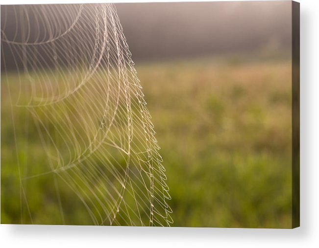 Spiderweb Acrylic Print featuring the photograph Morning Web by Christina Borders