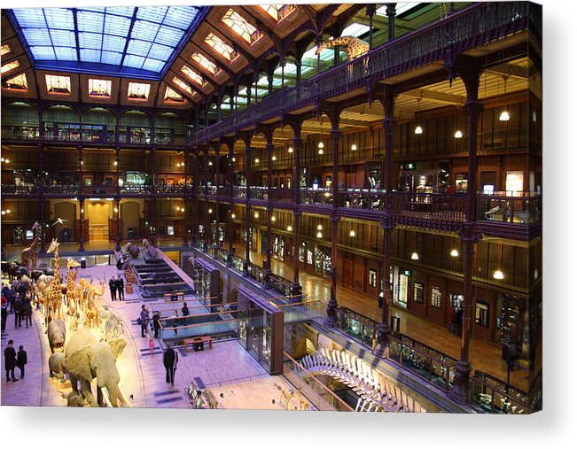 Paris Acrylic Print featuring the photograph National Museum Of Natural History - Paris France - 011370 by DC Photographer