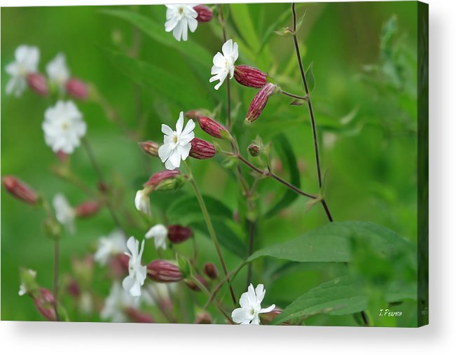 Flowers Acrylic Print featuring the photograph Natures Beauty by Jackson Pearson