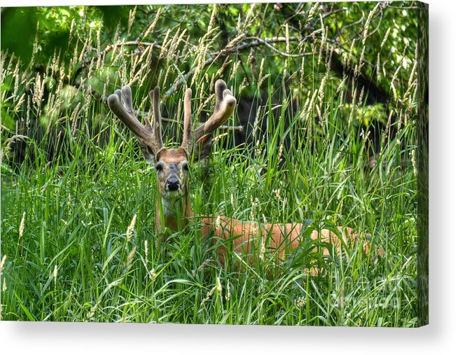 Rack Acrylic Print featuring the photograph Nice Rack In Velvet by M Dale