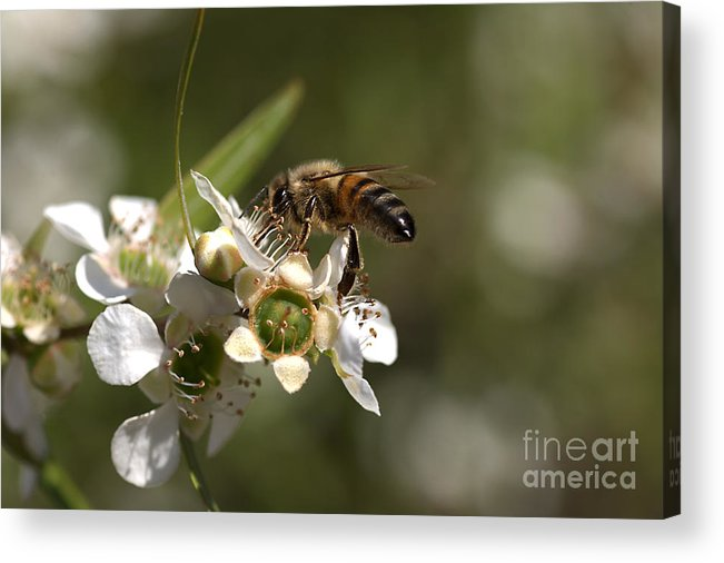 Joy Watson Acrylic Print featuring the photograph Nourishment by Joy Watson