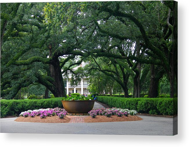 Tree Acrylic Print featuring the photograph Oak Alley Courtyard by Denise Mazzocco