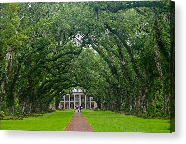 Tree Acrylic Print featuring the photograph Oak Alley Plantation by Denise Mazzocco