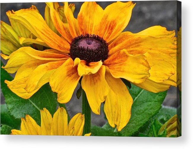 Floral Acrylic Print featuring the photograph Oh Summertime by Christine Belt