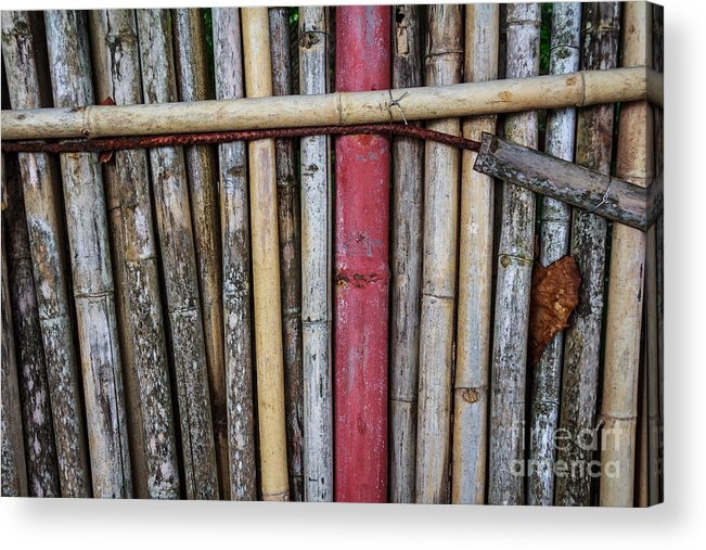 Brown Acrylic Print featuring the photograph Old Bamboo Fence by Niphon Chanthana