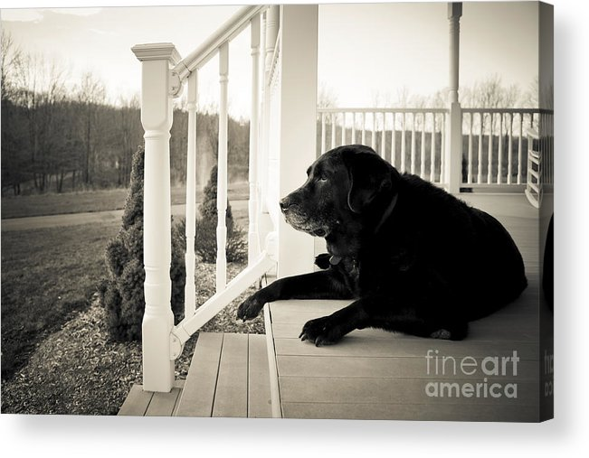 Dog Acrylic Print featuring the photograph Old Dog On A Front Porch by Diane Diederich