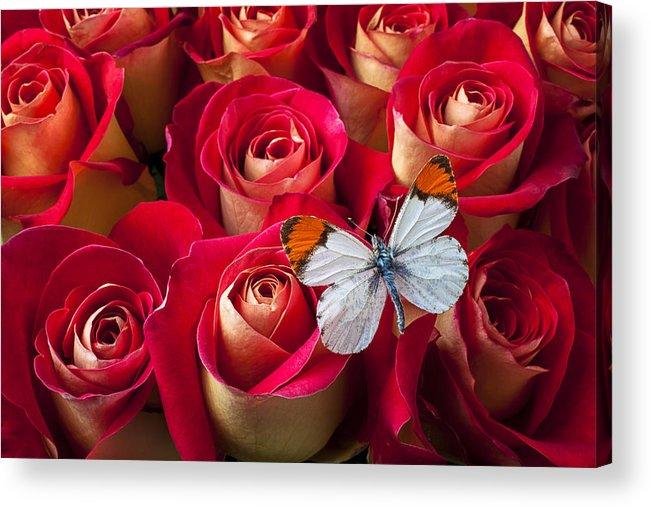 Flowers Acrylic Print featuring the photograph Orange Tip Butterfly by Garry Gay
