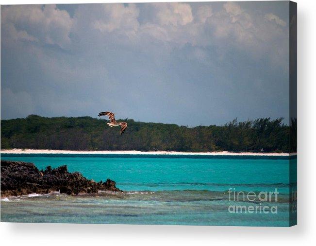 Fine Art Photography Acrylic Print featuring the photograph Osprey In Flight by Cheryl Hurtak