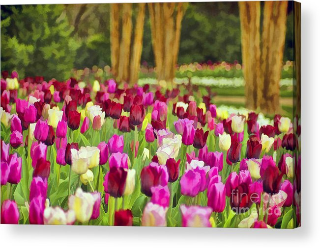 Nature Acrylic Print featuring the photograph Painted Tulips by Darren Fisher