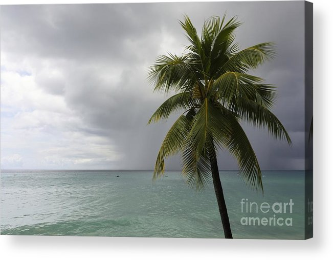 Palm Tree Acrylic Print featuring the photograph Palm Tree And Ocean by Sophie Vigneault