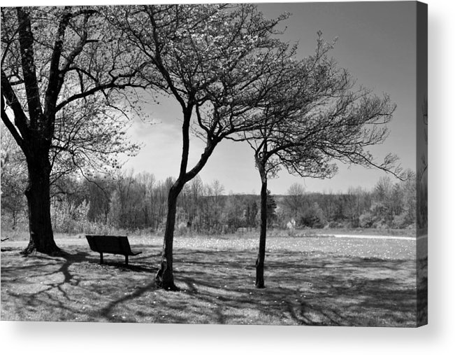 Park Bench Acrylic Print featuring the photograph Park Bench by Ann Bridges