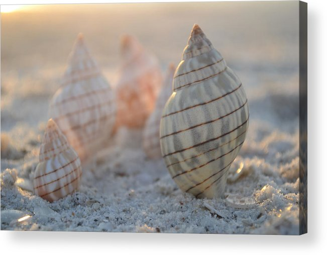 Seashell Acrylic Print featuring the photograph Patience And Faith by Melanie Moraga