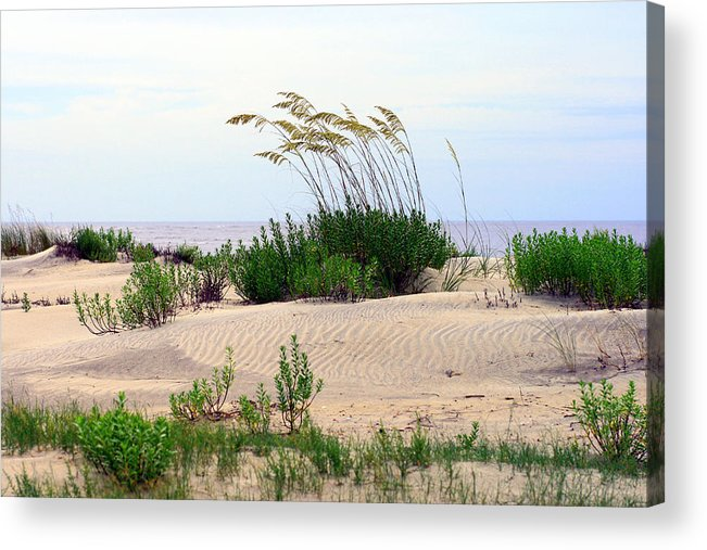 Beach Acrylic Print featuring the photograph Patterned Dune With Oats by Barbara Northrup
