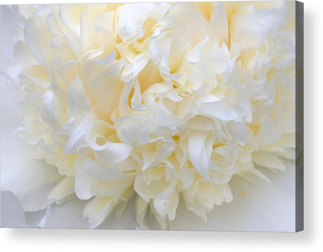 Peony Acrylic Print featuring the photograph Peony Close-up In Pale by Leda Robertson