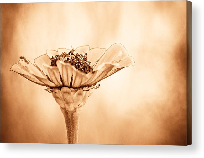 Flower Acrylic Print featuring the photograph Phillies Need A Win by Trish Tritz