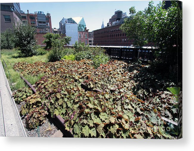 High Line Acrylic Print featuring the photograph Plants And Flowers On The High Line by Steven Spak
