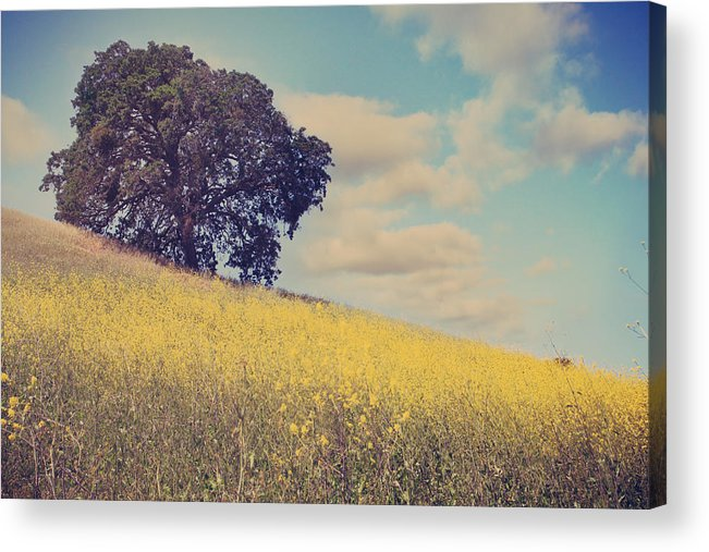 Mt. Diablo State Park Acrylic Print featuring the photograph Please Send Some Hope by Laurie Search