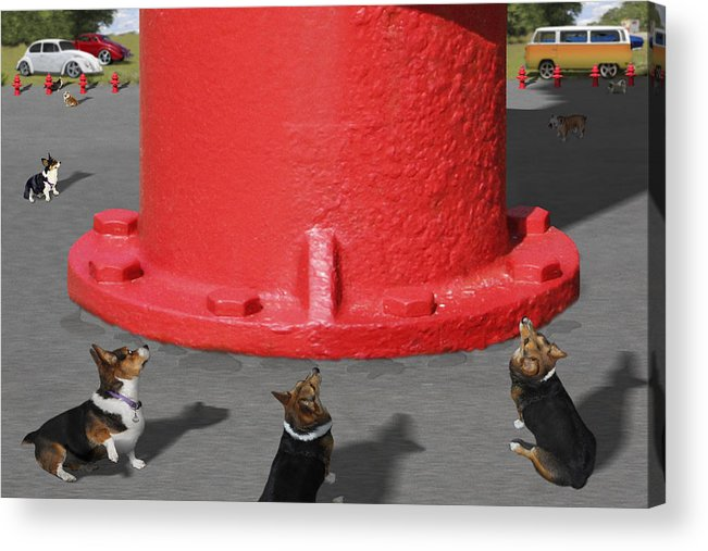 Corgis Acrylic Print featuring the photograph Postcards From Otis - The Hydrant by Mike McGlothlen