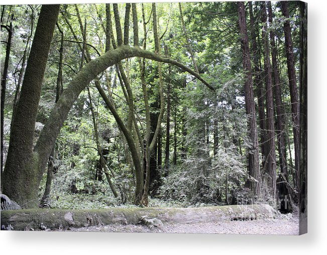 Landscape Acrylic Print featuring the photograph pr 136 - Bowed Tree by Chris Berry