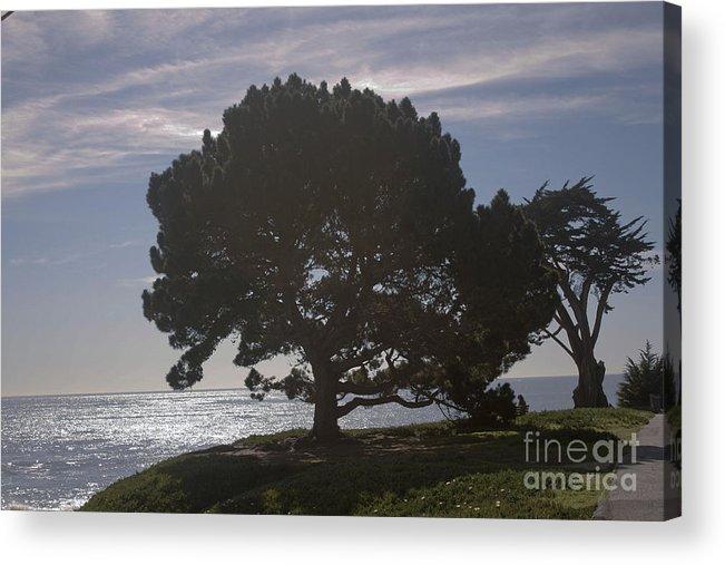 Landscape Acrylic Print featuring the photograph pr 216- Black Oak by Chris Berry