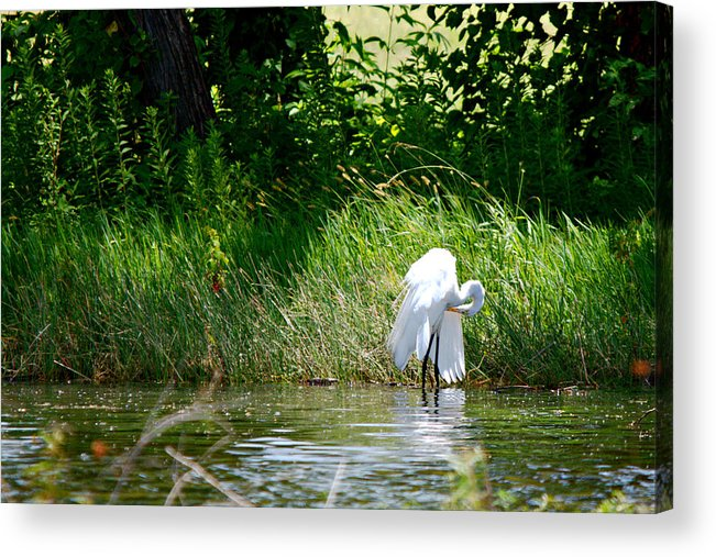 Roy Williams Acrylic Print featuring the photograph Preening In Tranquil Sunlight by Roy Williams