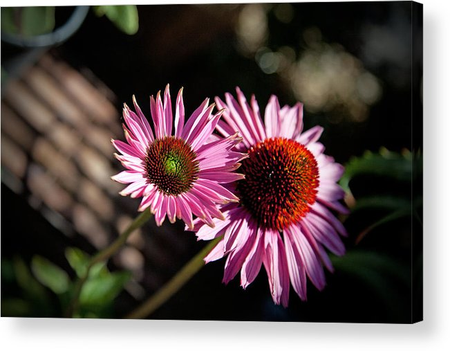 Flowers Acrylic Print featuring the photograph Pretty Flowers by Joe Fernandez