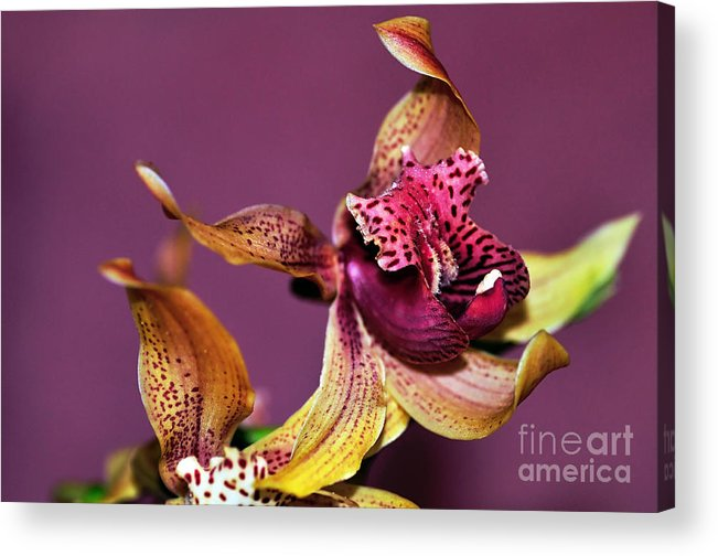 Photography Acrylic Print featuring the photograph Pretty Orchid On Pink by Kaye Menner
