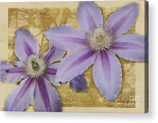 Flower Acrylic Print featuring the photograph Purple Clematis by Pam Holdsworth