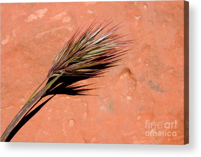 Nature Acrylic Print featuring the photograph Red Rock In Arizona by Julia Hiebaum