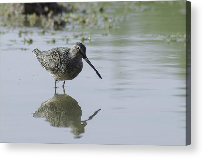 Bird Acrylic Print featuring the photograph Reflections On The Pond by Lorraine Harrington